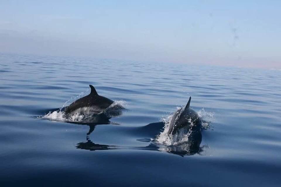 snorkelen met dolfijnen in spanje